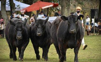 Las actividades se realizaron en la Asociación Rural de Florida.