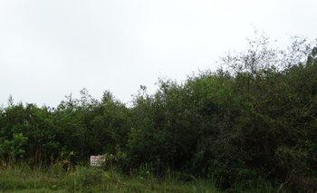 El área de monte nativo es objeto de una especial vigilancia.