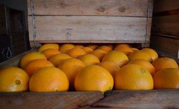 Cajón de naranjas uruguayas.