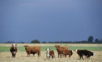 La ganadería ha sido uno de los sectores más pujantes en lo que va de 2021.