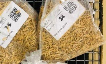 Hay 23.000 semillas en el banco de germoplasma del INIA en La Estanzuela.