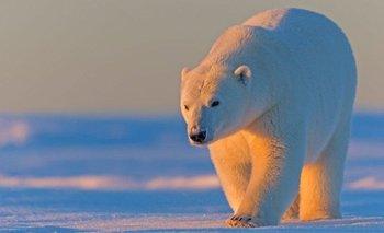 El Refugio Nacional de Vida Silvestre del Ártico es la reserva natural más prístina de Estados Unidos