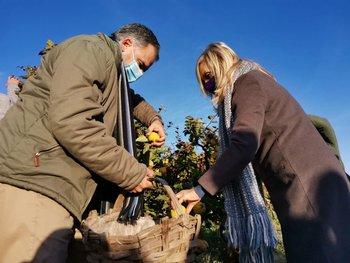 Yamandú Orsi y Beatriz Argimón recolectando membrillo en Canelón Chico