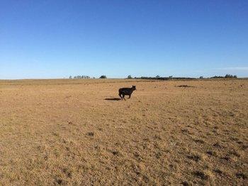 El agro sufrió varios episodios de sequías, como el de la foto de 2018.