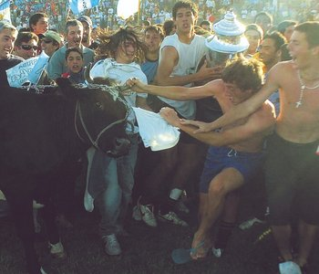 Rocha campeón y festeja la vaca, en 2005.