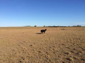 Una fuerte sequía afecta a Uruguay, en 2018