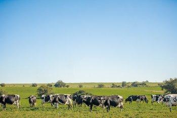 La Cooperativa obtuvo la Certificación Grass Fed.