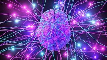 En el mismo cerebro tenemos lo que es complejo y lo que es esencial y eso provoca que muchas de las cosas complicadas que hacemos, desencadenen reacciones primitivas que están en un nivel mucho más básico