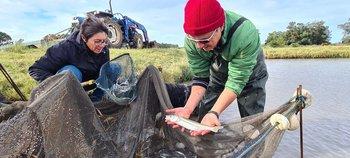 La producción de pejerreyes es de los emprendimientos más recientes en esta granja acuícola.