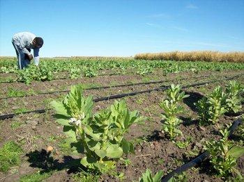 Se presentaron estudios que analizan de qué forma el cooperativismo agrario contribuye a los procesos de desarrollo local.