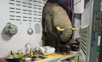 Así aparece el elefante a pedir comida en una casa tailandesa