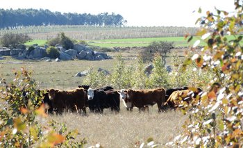 Forestación y ganadería, sinergia apuntalada por una nueva certificación.