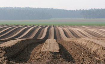 Durante la pandemia, el sector agropecuario emergió exhibiendo musculatura y resiliencia.