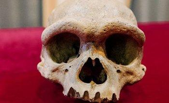 """El cráneo del """"hombre dragón"""" es enorme y el tamaño de su cerebro pudo haber sido similar al promedio de nuestra especie"""