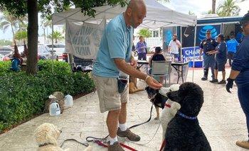 Voluntarios llevaron perros a la zona del derrumbe en Florida para asistencia emocional