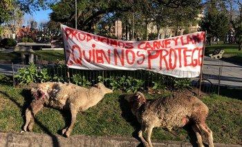 Los reclamos por ovinos muertos tras ataques de perros, una postal cotidiana.