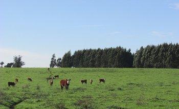Uno es de explotación agrícola y el otro agrícola-ganadero