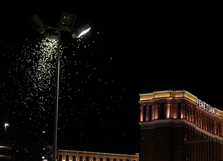 Saltamontes se toman Las Vegas en EE.UU