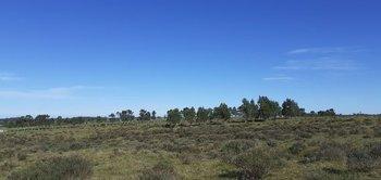 El predio es campo natural sin mejoras, con buen acceso y aguadas permanentes.