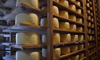 Producción de quesos en un establecimiento en Colonia.