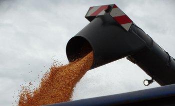 Cosecha de maíz.