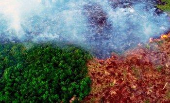 Investigadores vinculan los cambios en la selva amazónica con la deforestación