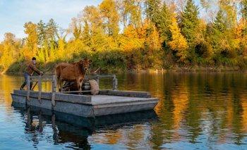 Fisrt Cow