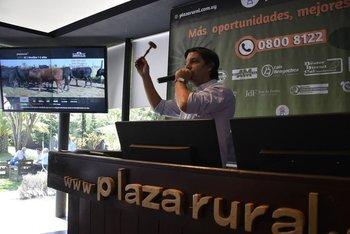 Plaza Rural realizará la venta Nº 236 de su remate ganadero por pantalla.