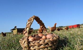 Producción de huevos en La Topada, con base en el respeto al bienestar animal.