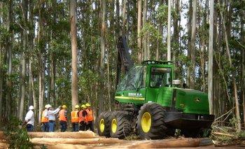 """El estudio, realizado por Exante, se titula: """"Contribución del sector forestal a la economía uruguaya""""."""