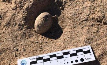 Imagen de uno de los huevos hallados. Tienen más de 85 millones de años.