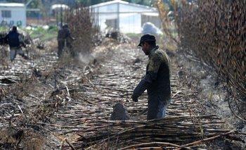 Nuevo modelo para el pago a los productores incorpora como variable elprecio internacional del azúcar.