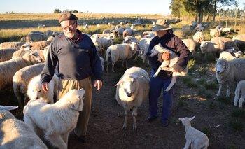 Juan y Elsa con sus perros pastores y la majada que manejan en Cañada Grande.