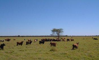 """El gobierno rechaza un tuit """"simplista"""" de la ONU y defiende la ganadería"""