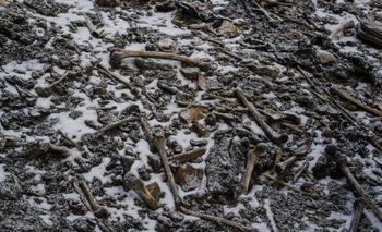Los huesos de cientos de personas fueron hallados en 1942 por un guardabosques de la zona