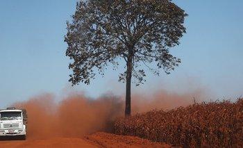 """""""La vegetación de sabana ya no logrará generar una parte de la lluvia que generaba el bosque tropical""""."""