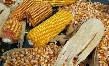 El gobierno argentino restringió la exportación de maíz entero, pero no para el partido..