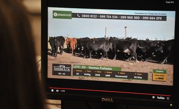 Impresionante oferta de Plaza Rural, 37.103 vacunos y 1.600 ovinos