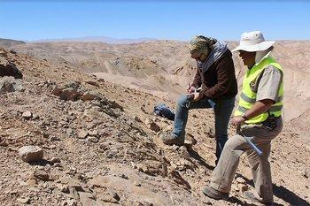 Rodrigo Otero indicó que existe sólo un registro anterior de Vinialesaurus en el mundo. Del Muraenosaurus, agrega, se obtuvo el segundo y más completo registro fósil hallado en Sudamérica