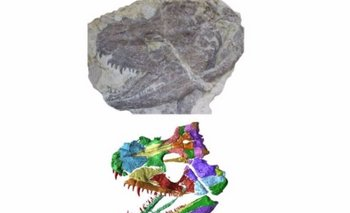 Reconstrucción de fósil con impresora 3D