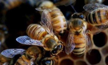 Las abejas expuestas a múltiples productos químicos usados en la agricultura enfrentan riesgos mucho mayores de lo que se pensaba.