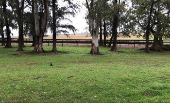 Campos mixtos, óptimos para gandería con áreas para mejoramiento o agricultura.