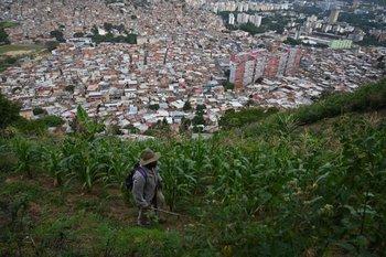 Vecinos cultivan en La Vega, con vista a la ciudad de Caracas.