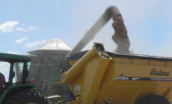 Se espera otra buena cosecha de trigo en Uruguay.