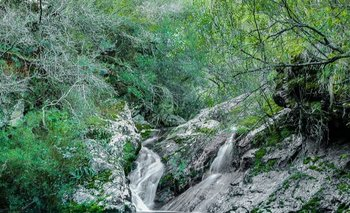 Cascadas de agua cristalina en una quebrada de monte nativo junto a paredones de piedra.