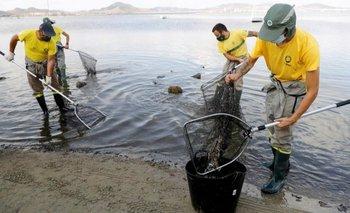 Trabajadores municipales recogiendo peces muertos en la playa del Mar Menor el pasado 21 de agosto