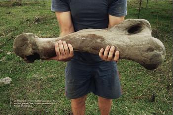 Un fémur del perezoso Lestodon: es de los huesos más grandes hallados hasta el momento