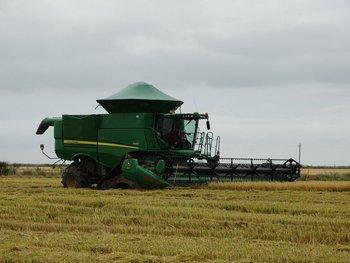 Hubo vientos en Rocha y Treinta y Tres y preocupa el daño a la cosecha arrocera.
