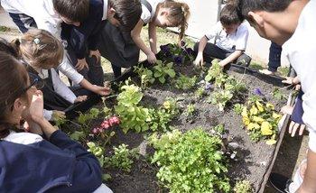 Actividad de huerta que comparten alumnos de sexto con primero de primaria