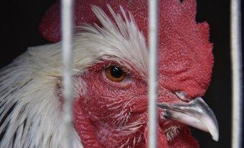 OMS busca suspender la venta de animales vivos en mercados